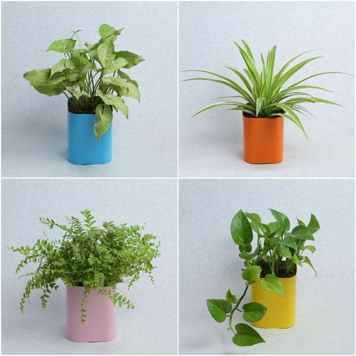 combi plants